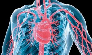Arc-en-Sed-SED-vasculaire